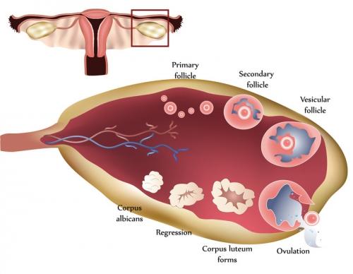 endométriose exérèse,horace roman endométriose,endométriose énergie plasma,traitement endométriose,décapeptyl effets indésirables,endométriose conflits d'intérêt,endométriose ablation plasma,plasma jet endométriose,chirurgie fertilité,loïc marpeau,michel canis endométriose,endométriose résection,endométriose traitement médical,endométriose traitement hormonal,endométriose ménopause,endométriose chu rouen,david redwine endométriose,endométriose guérison,endométriose récidive